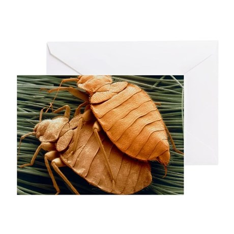 SEM of bed bugs - Greeting Cards (Pk of 10)