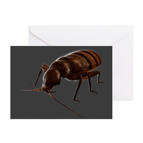 Bedbug, artwork - Greeting Cards (Pk of 10)
