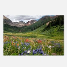 Alpine flowers in Rustler's Gulch - Postcards (Pk