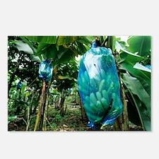 Banana tree - Postcards (Pk of 8)