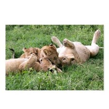 African lions - Postcards (Pk of 8)