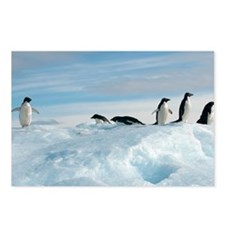 Adelie penguins - Postcards (Pk of 8)