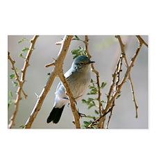Blackstart in a tree - Postcards (Pk of 8)
