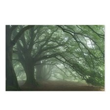 Ancient Beech woodland - Postcards (Pk of 8)