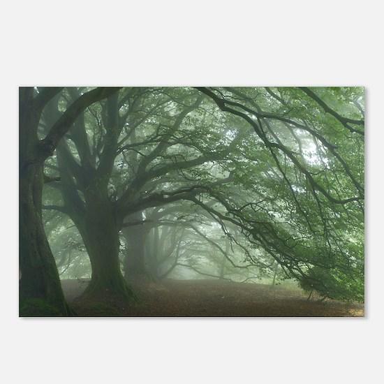 Ancient Beech woodland - Postcards (Pk of 8)