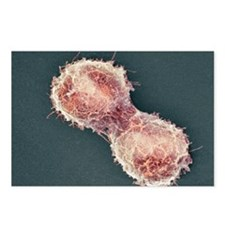 Cell division, SEM - Postcards (Pk of 8)