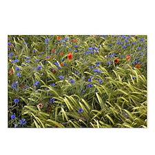 Cornfield meadow in France - Postcards (Pk of 8)
