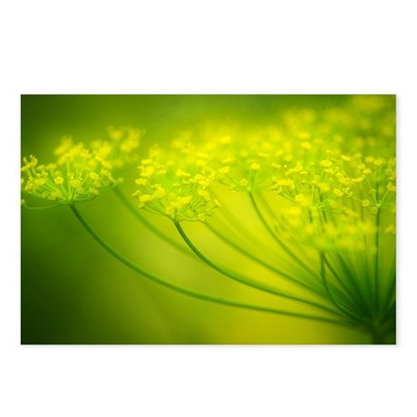 Dill (Anethum graveolens) - Postcards (Pk of 8)