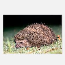 East European hedgehog - Postcards (Pk of 8)