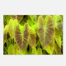 Elephant Ear (Colocasia esculenta) - Postcards (Pk
