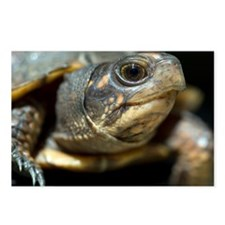 Eastern box turtle - Postcards (Pk of 8)