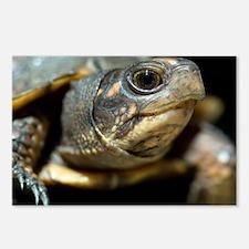 Eastern box turtle - Postcards (Pk of 8)