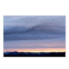European starling flock - Postcards (Pk of 8)
