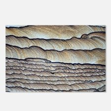Fossilised sand - Postcards (Pk of 8)