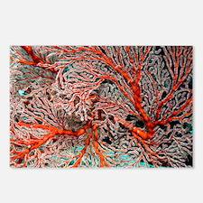 Gorgonian - Postcards (Pk of 8)