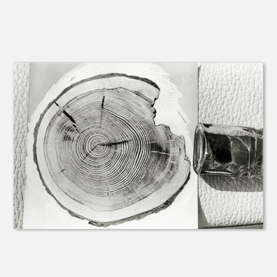 Growth rings on a tree from Tunguska - Postcards (
