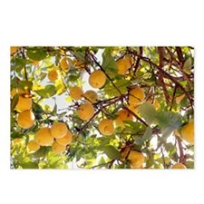Lemons - Postcards (Pk of 8)