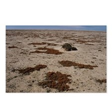 Lichen (Teloschistes capensis) - Postcards (Pk of