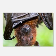 Malayan Flying Fox - Postcards (Pk of 8)