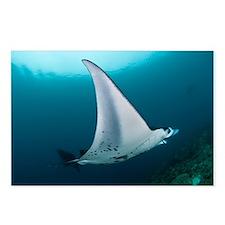 Manta ray - Postcards (Pk of 8)