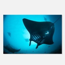 Manta rays - Postcards (Pk of 8)