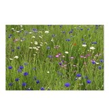 Cornflower Postcards