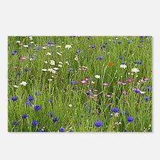 Meadow flowers - Postcards (Pk of 8)