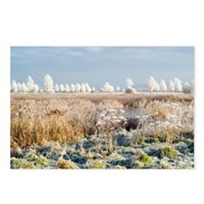 Morning frost - Postcards (Pk of 8)