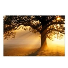 Oak tree at sunrise - Postcards (Pk of 8)