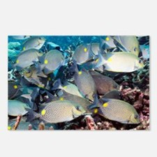 Orange-spotted spinefoot fish - Postcards (Pk of 8