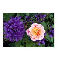 Rose flower and clustered bellflowers - Postcards