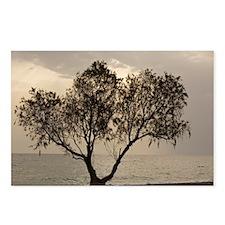 Tamarisk tree - Postcards (Pk of 8)