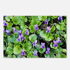 Viola odorata (Sweet Violets) - Postcards (Pk of 8