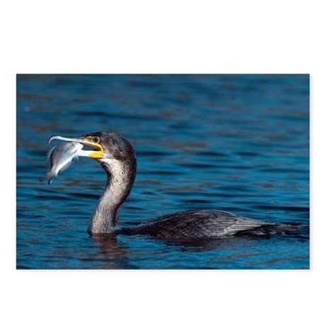 White-breasted cormorant with fish - Postcards (Pk