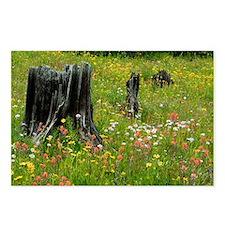 Wildflower meadow - Postcards (Pk of 8)