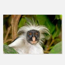 Zanzibar red colobus monkey - Postcards (Pk of 8)