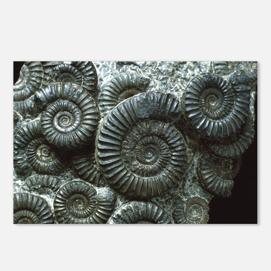 Ammonite fossils - Postcards (Pk of 8)