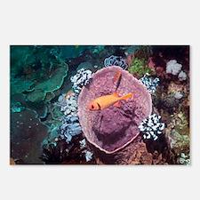 Blotcheye soldierfish on a reef - Postcards (Pk of