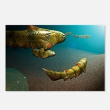 Climatius sp. prehistoric fish - Postcards (Pk of