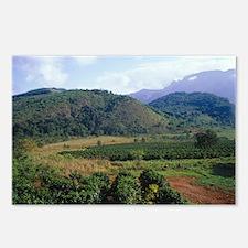 Coffee plantation - Postcards (Pk of 8)