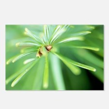Conifer leaves - Postcards (Pk of 8)