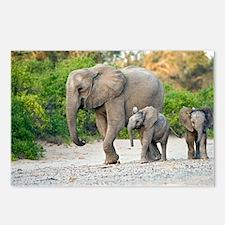 Desert-adapted elephants - Postcards (Pk of 8)