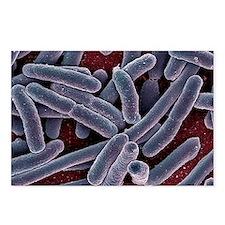 E. coli bacteria, SEM - Postcards (Pk of 8)