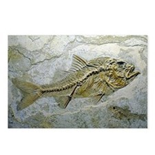 Fish fossil - Postcards (Pk of 8)