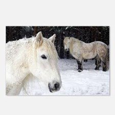Highland ponies - Postcards (Pk of 8)