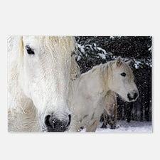 Highland ponies - Postcards (Pk of 8)