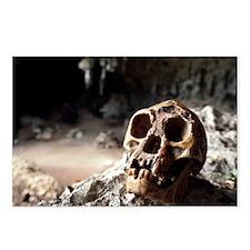 Homo floresiensis skull - Postcards (Pk of 8)