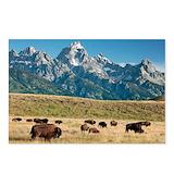 Buffalo Postcards