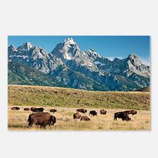 Herd of American Bison - Postcards (Pk of 8)