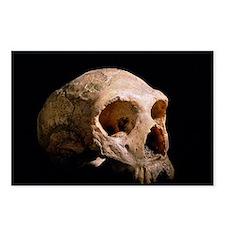 Neanderthal skull - Postcards (Pk of 8)